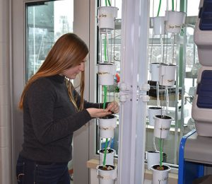 A student works in the new Ag Plant room.